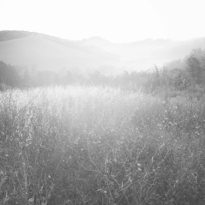 Views_unrivalled_field-1800x1200